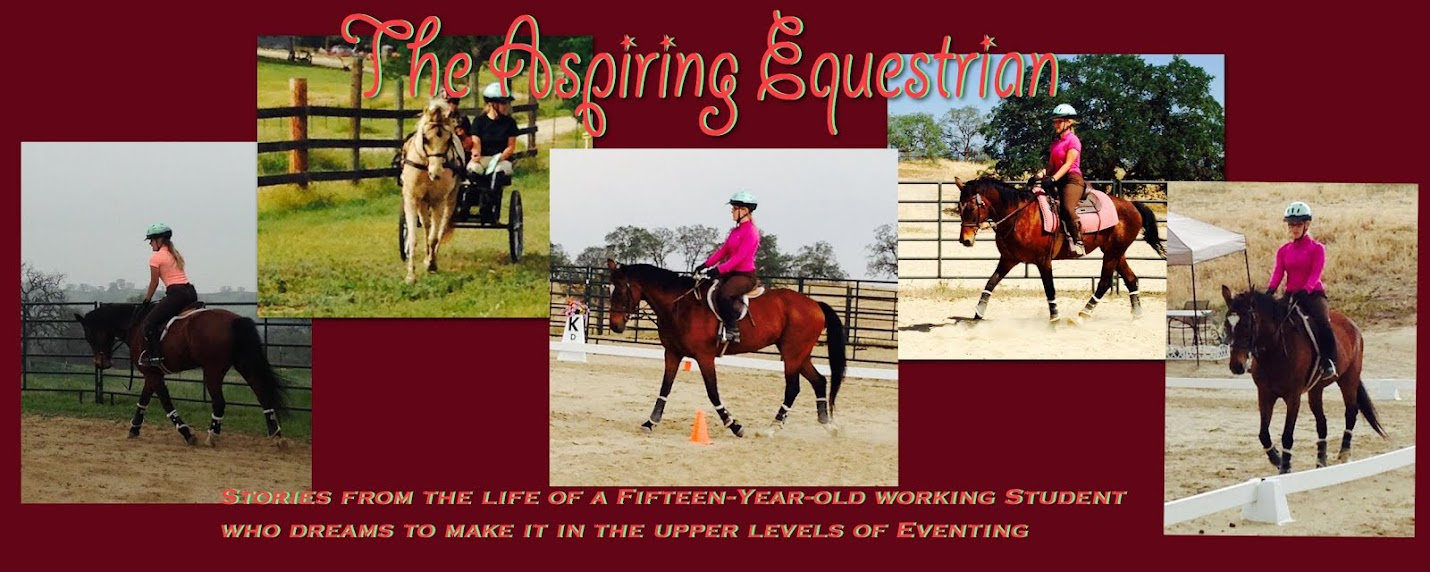 The Aspiring Equestrian