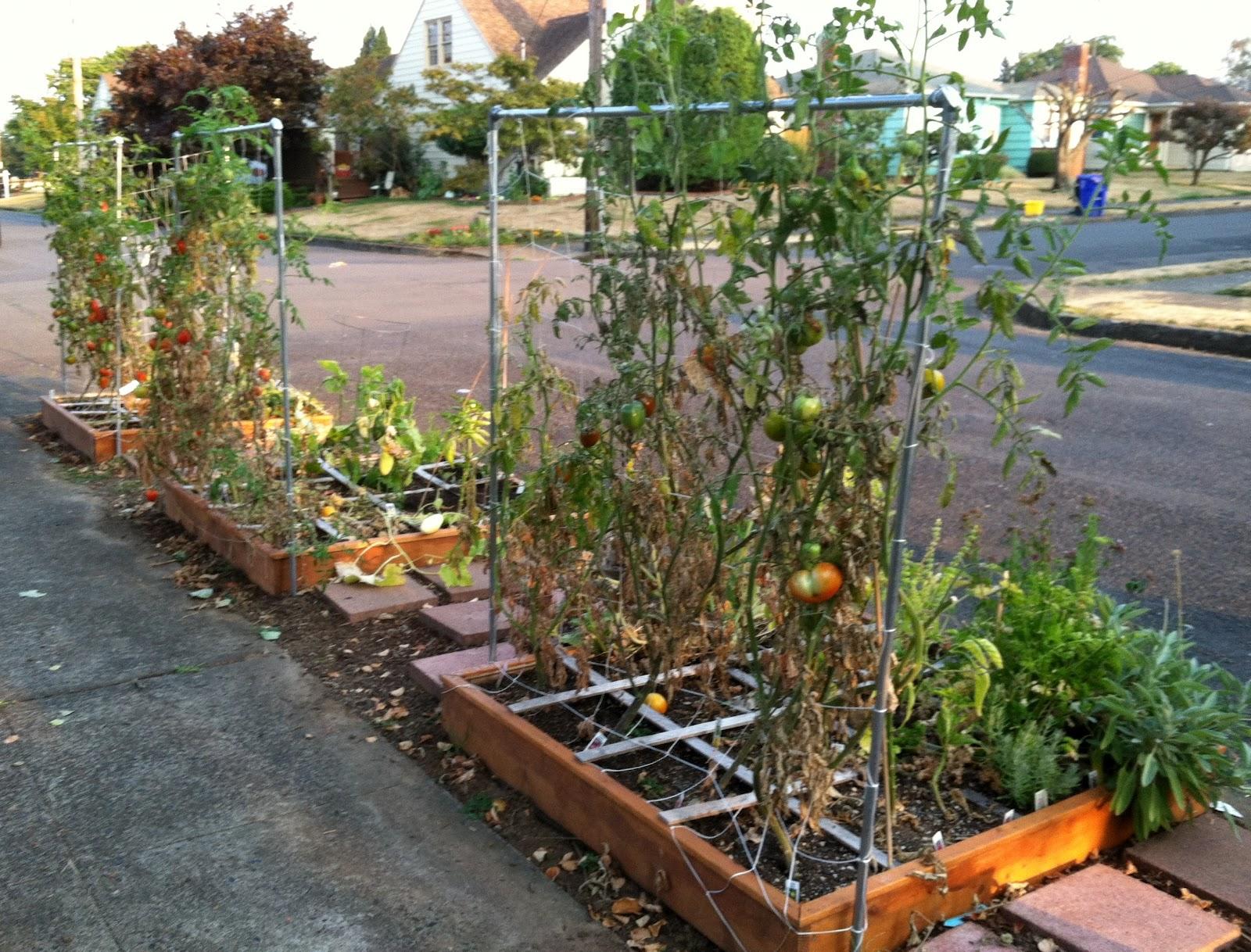 danger garden: Autumn on the corner