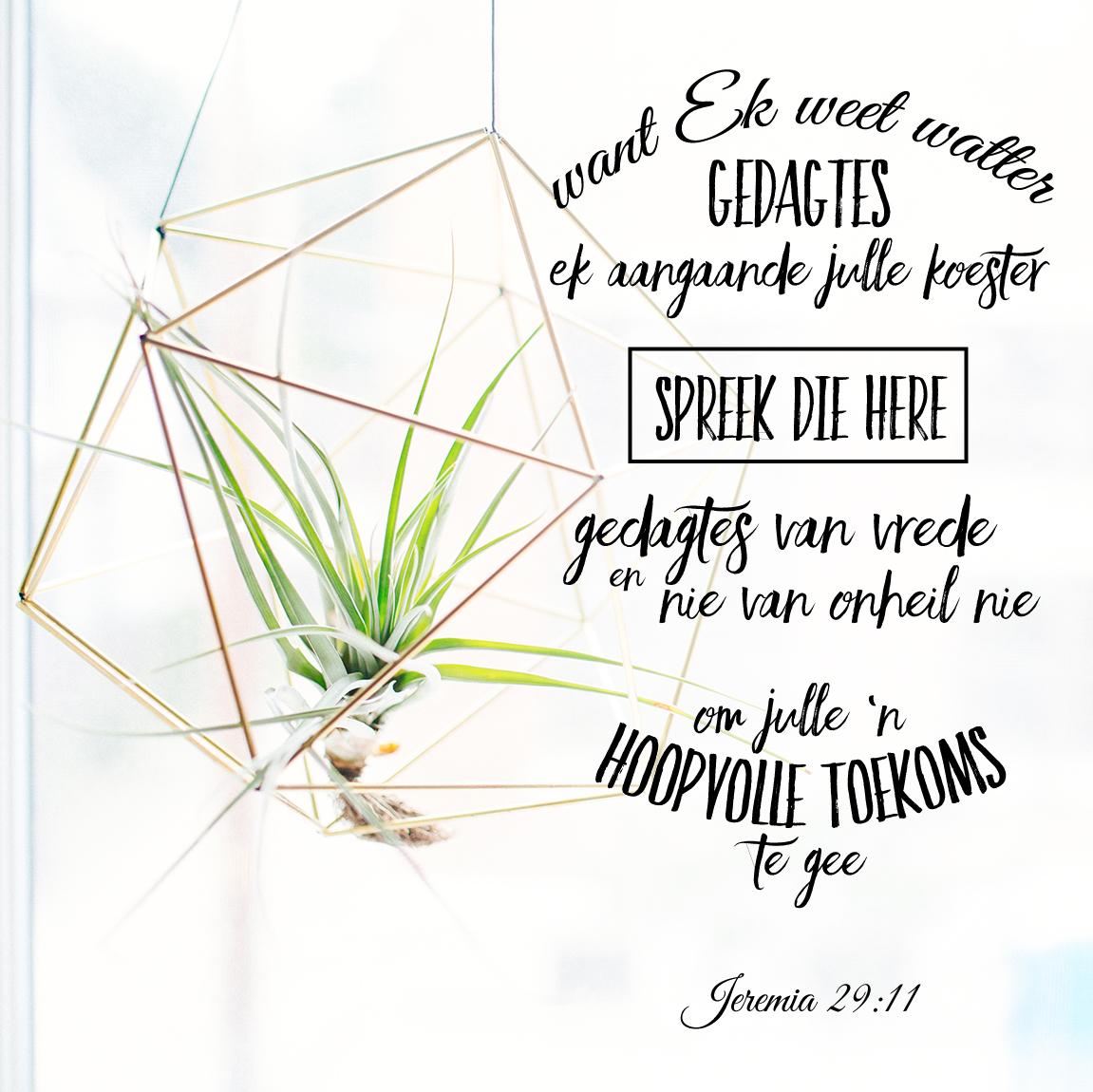 Want Ék weet watter gedagtes Ek aangaande julle koester, spreek die Here , gedagtes van vrede en nie van onheil nie, om julle 'n hoopvolle toekoms te gee. JEREMIA 29:11 #afrikaans #bybelvers