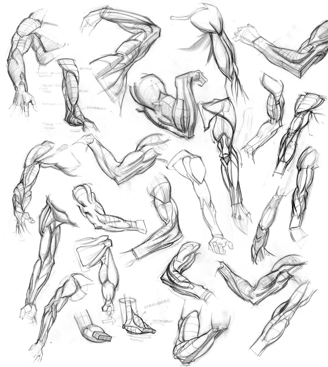 Wouter Tulp | Illustrator |: Anatomy