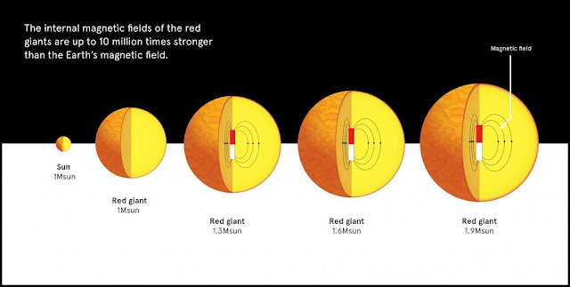 Stars like the Sun puff up and become red giants towards the end of their lives. The red giants ('old' Suns) of the same mass as the Sun do not show strong magnetic fields in their interior, but for stars slightly more massive, up to 60 percent host strong magnetic fields. Credit: University of Sydney