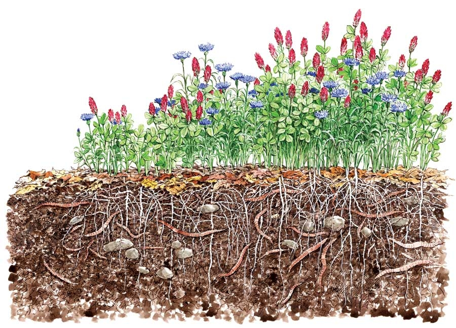 For a Greener Living: Sow Cover Crops for a Healthier Soil