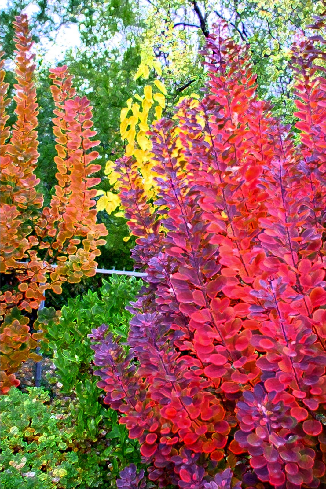 color tree bush - photo #12