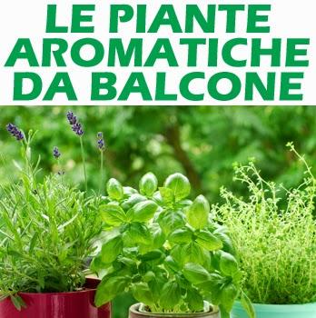 Informati Propriet E Benefici Delle Piante Aromatiche Da Balcone
