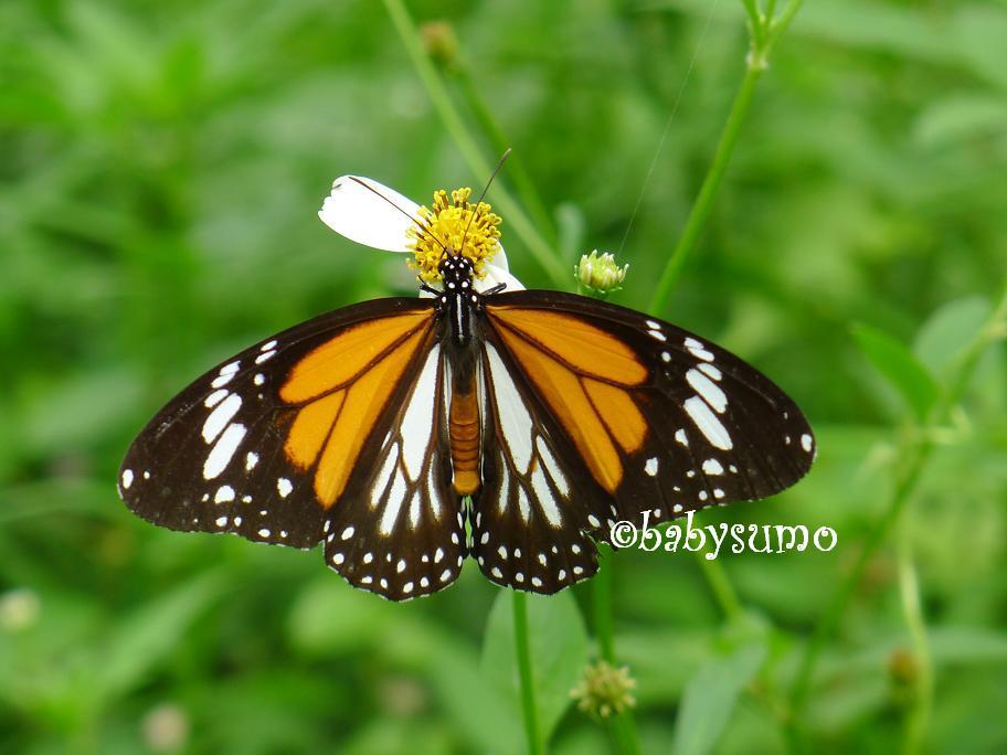 Butterfly Garden Baby Room