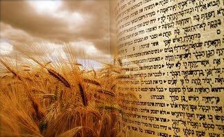✡ Sărbătoarea Săptămânilor – Shavuot שבועות