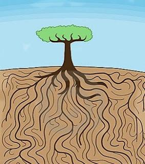 ağacın kökleri