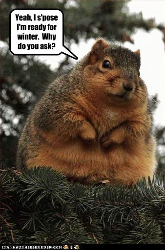 Funny squirrel pictures - photo#5