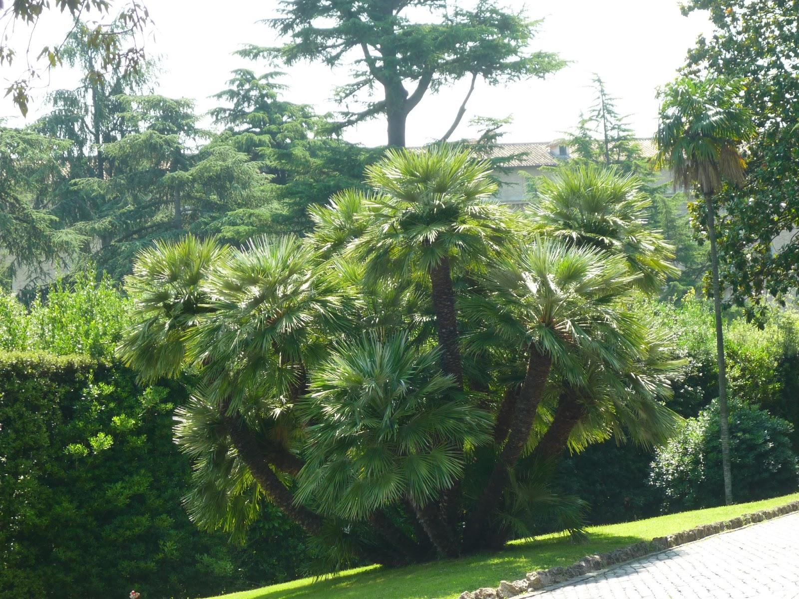 Parroquia de san cayetano los jardines vaticanos for Jardines vaticanos