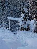 Pihakuva talvella