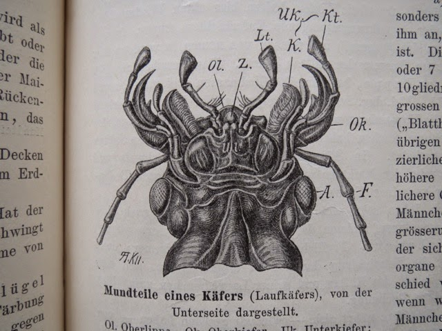 Illustrationen: vom Tiermaler Albert Kull (1855-1921).
