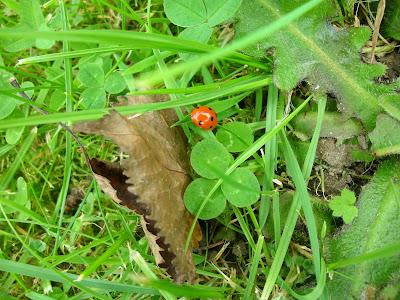 Ladybird on a Sunny Saturday
