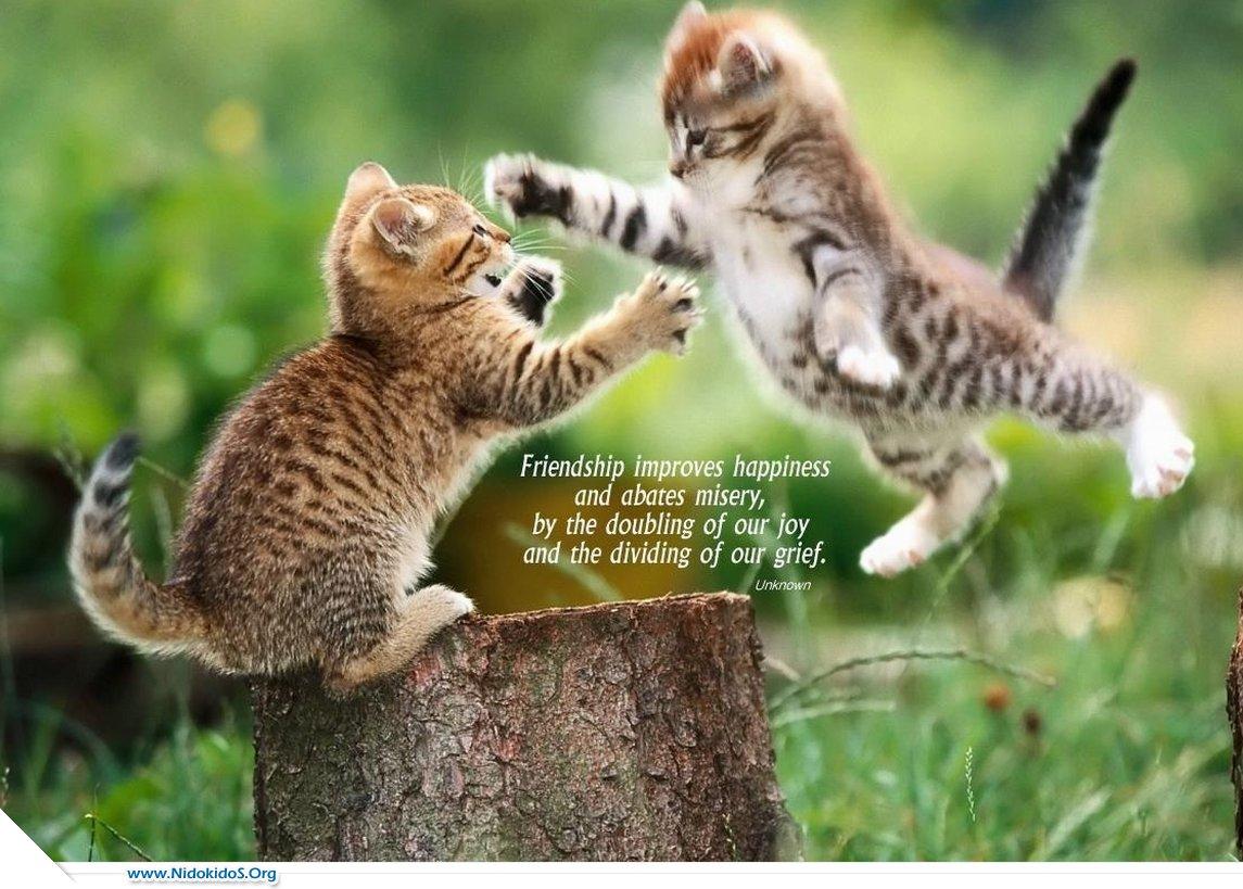http://4.bp.blogspot.com/-Bqy7fLpwJ9k/UBAtXQc86eI/AAAAAAAAEYw/5YmNdWM_UVo/s1600/friendship+(5).jpg