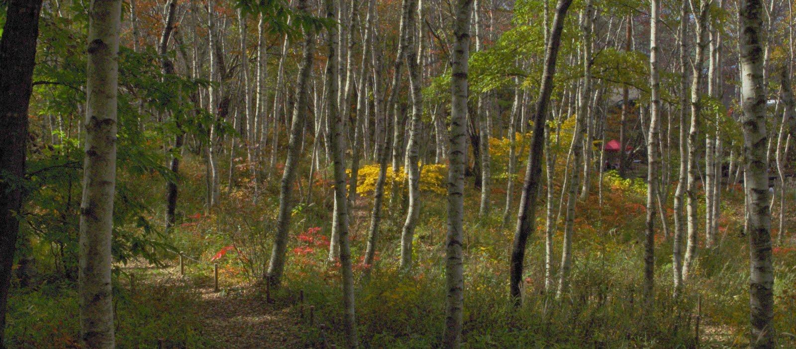 秋の穴場。八ヶ岳自然文化園