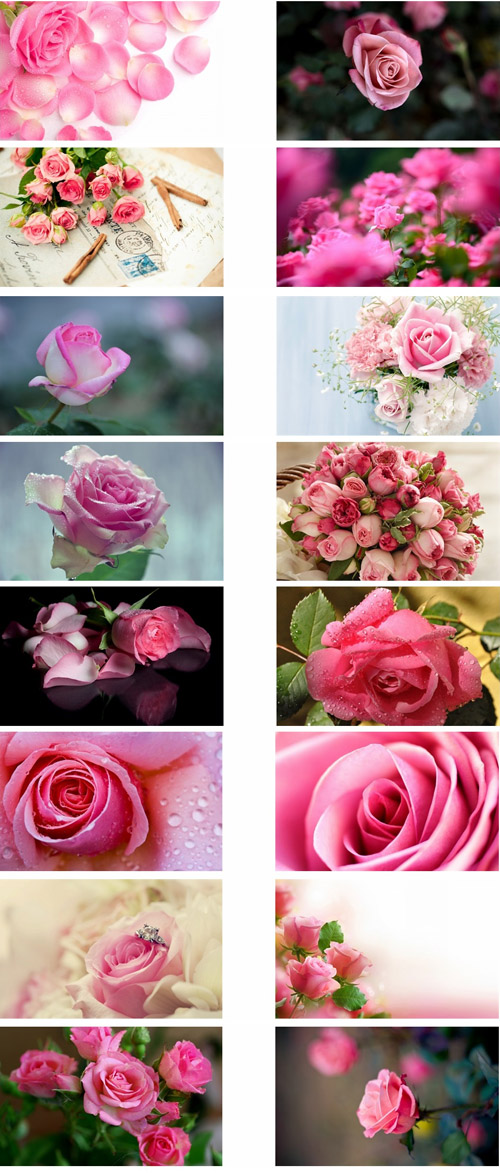 Pink Roses Flowers Theme For Windows 7 And 8