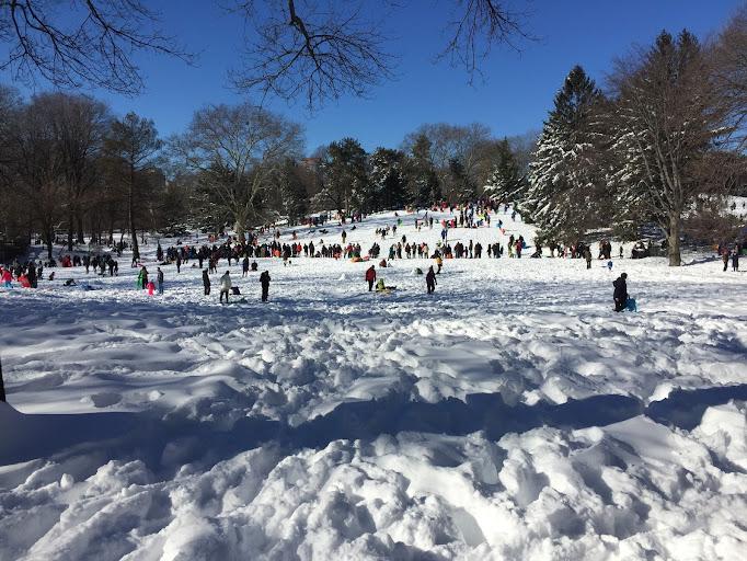 sledding in Central Park, NYC
