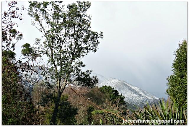 Snow in New Zealand  ||  joceesfarm.blogspot.co.nz
