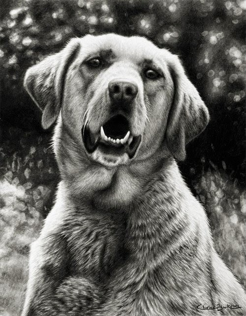 08-Charles-Black-Hyper-Realistic-Pencil-Drawings-of-Dogs-www-designstack-co