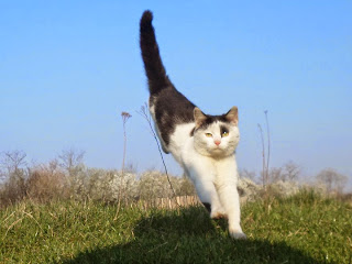 kucing lompat