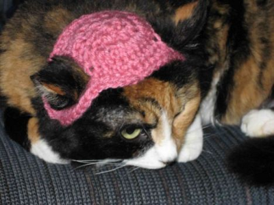 Cat In A Pink Hat