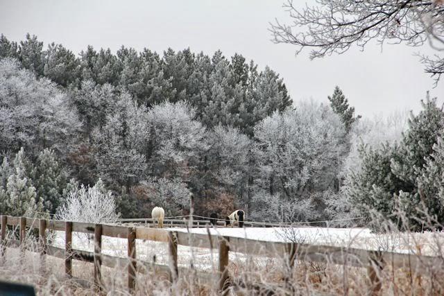 February 2013 hoarfrost