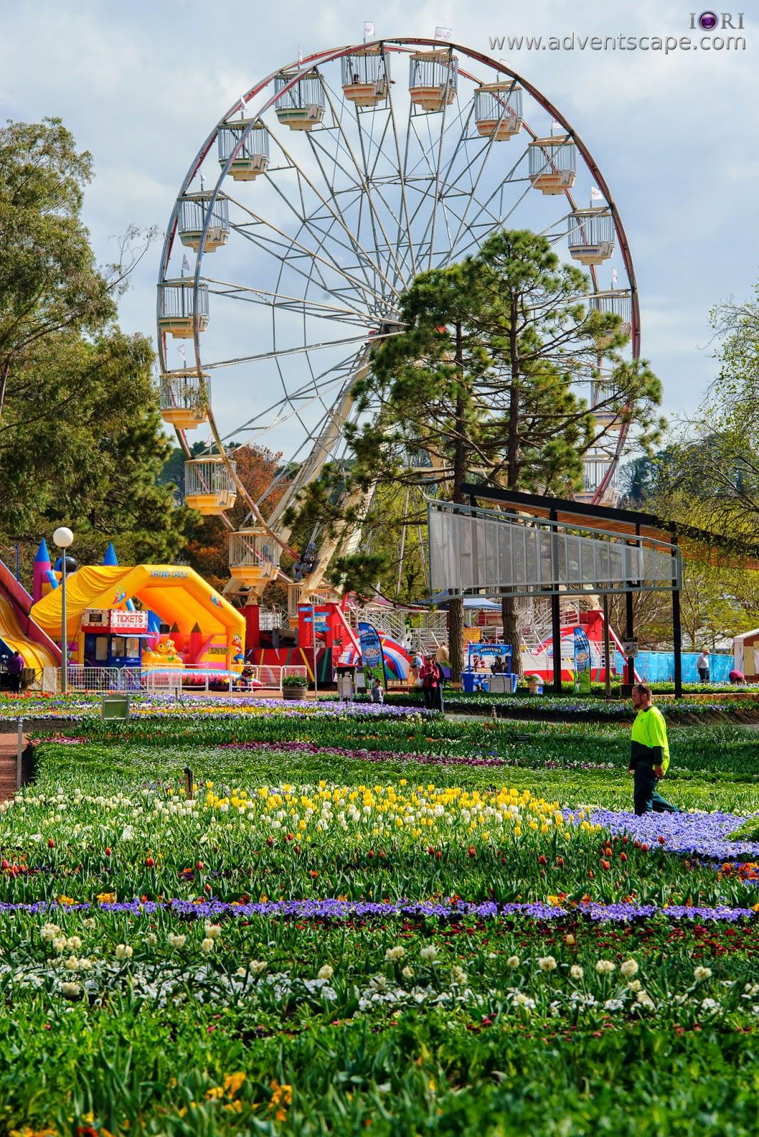 Philip Avellana, iori, advenscape, Floriade, 2014, spring festival, Canberra, ACT, Australian Capital Territory, park, flowers, blossom, Ferris Wheel