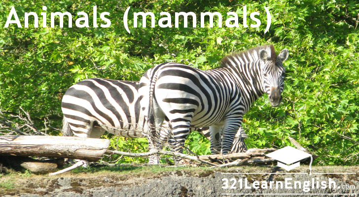 Vocabulary: Animals (mammals) (Level: A2)