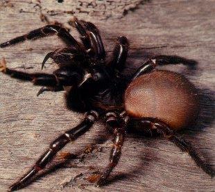 10 serangga paling berbahaya di dunia Treefws2