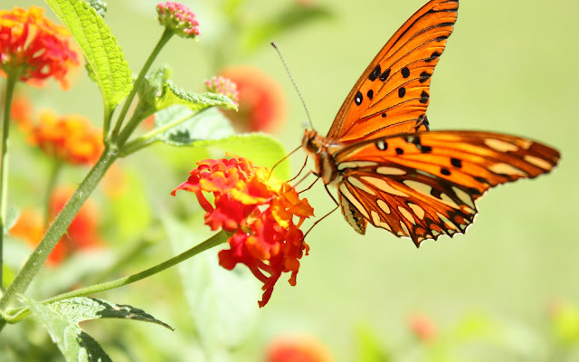 Butterfly on the flower HD wallpaper