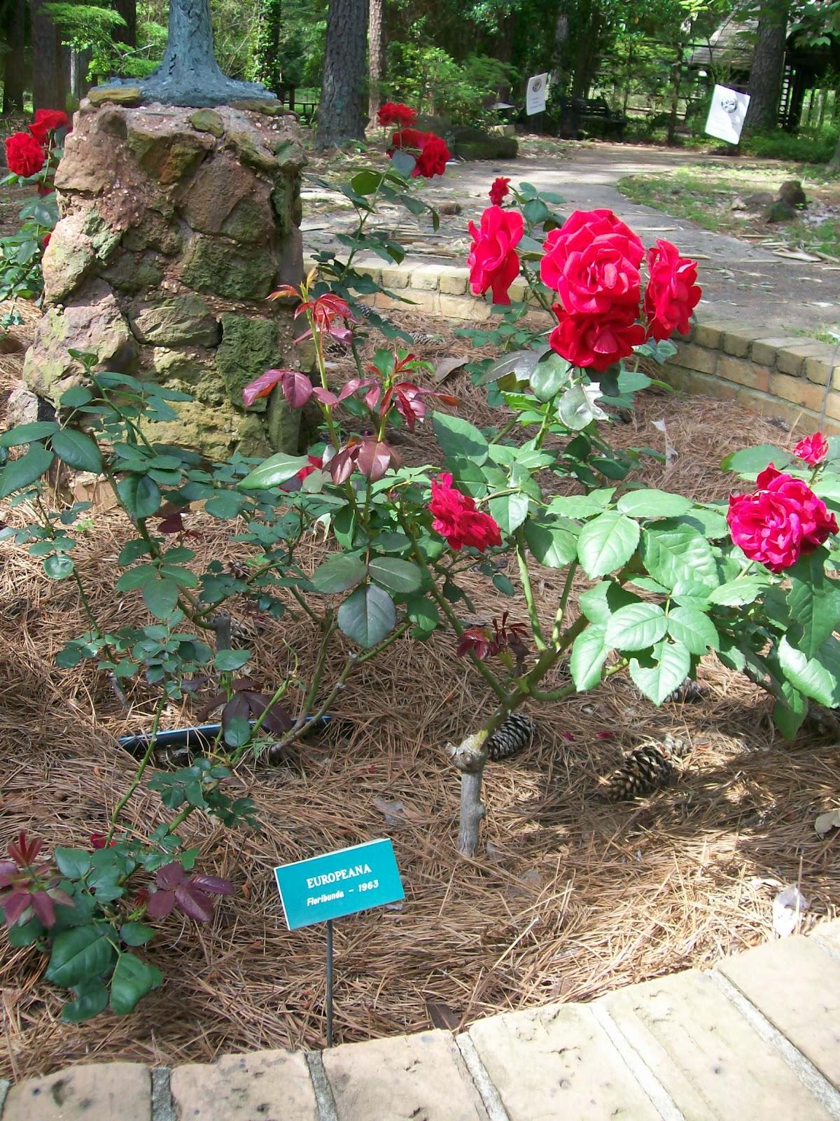 Rockhounding Around American Rose Society Home The Shreveport Rose