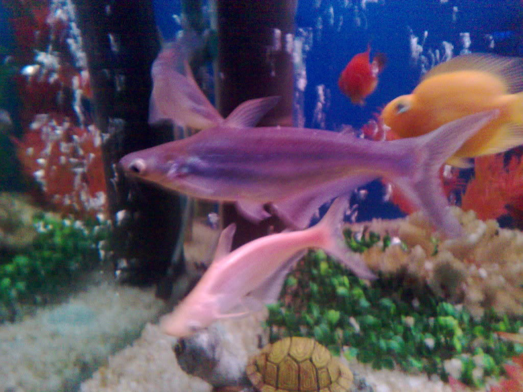 Aquarium shark fish for Shark fish tank