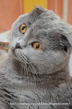 Котик месяца МАЙ