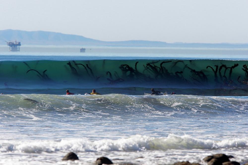 Tentáculos de algas gigantes