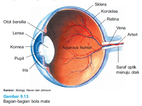 bagian bola mata