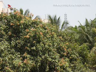 The Mango Tree on 19th Feb 2012