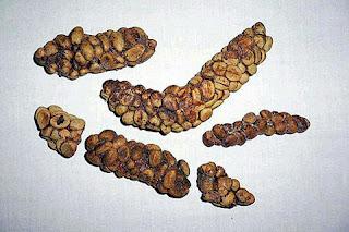 Sejarah Kopi Luwak - Kopi Luwak Mahal - Kopi Termahal Di Dunia - Kopi Luwak Robusta - Kopi Luwak Arabica - Ingin Info