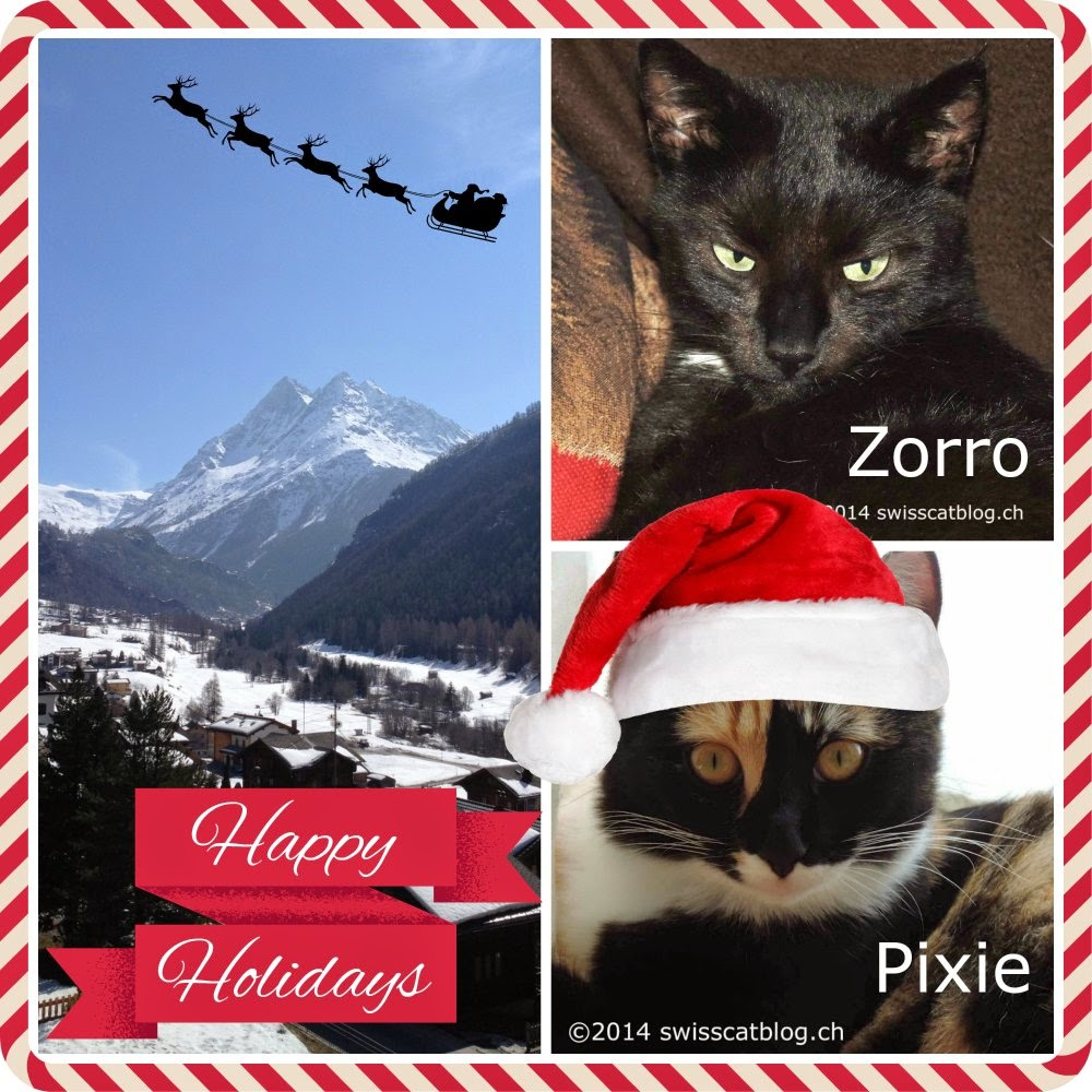 From the Swiss Cats