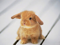 BABY ANIMALS COLLECTION (6) HD WALLPAPER