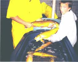 picture of spawning process for arctic char