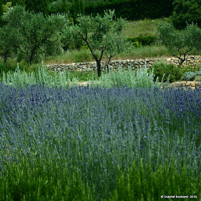 Jardins cosmopolites champs de lavande jardins du mus e international de la parfumerie grasse - Jardin du musee international de la parfumerie ...