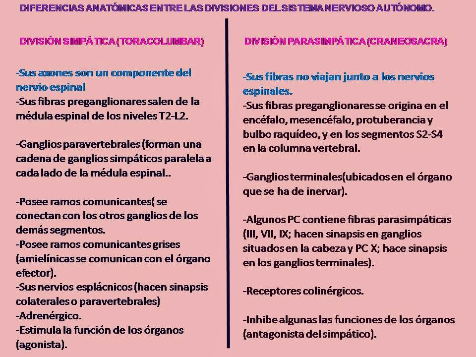 DIVISIONES DEL SISTEMA NERVIOSO AUTONÓMO | Blog de Fisiología Médica