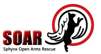 Sphynx Open Arms Rescue