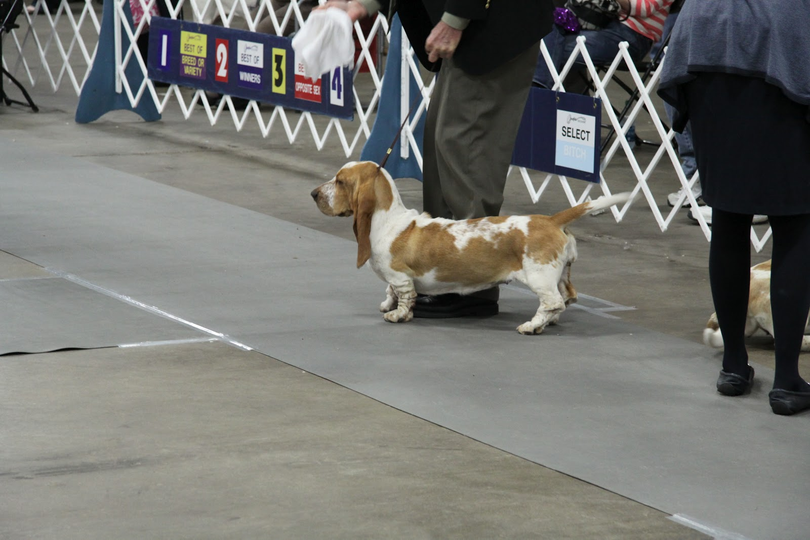 Dog Show Louisville Ky