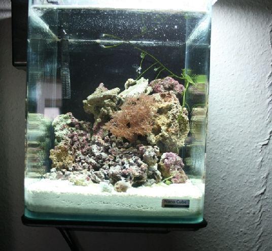 nano meerwasser aquaristik 10 liter mini riff. Black Bedroom Furniture Sets. Home Design Ideas