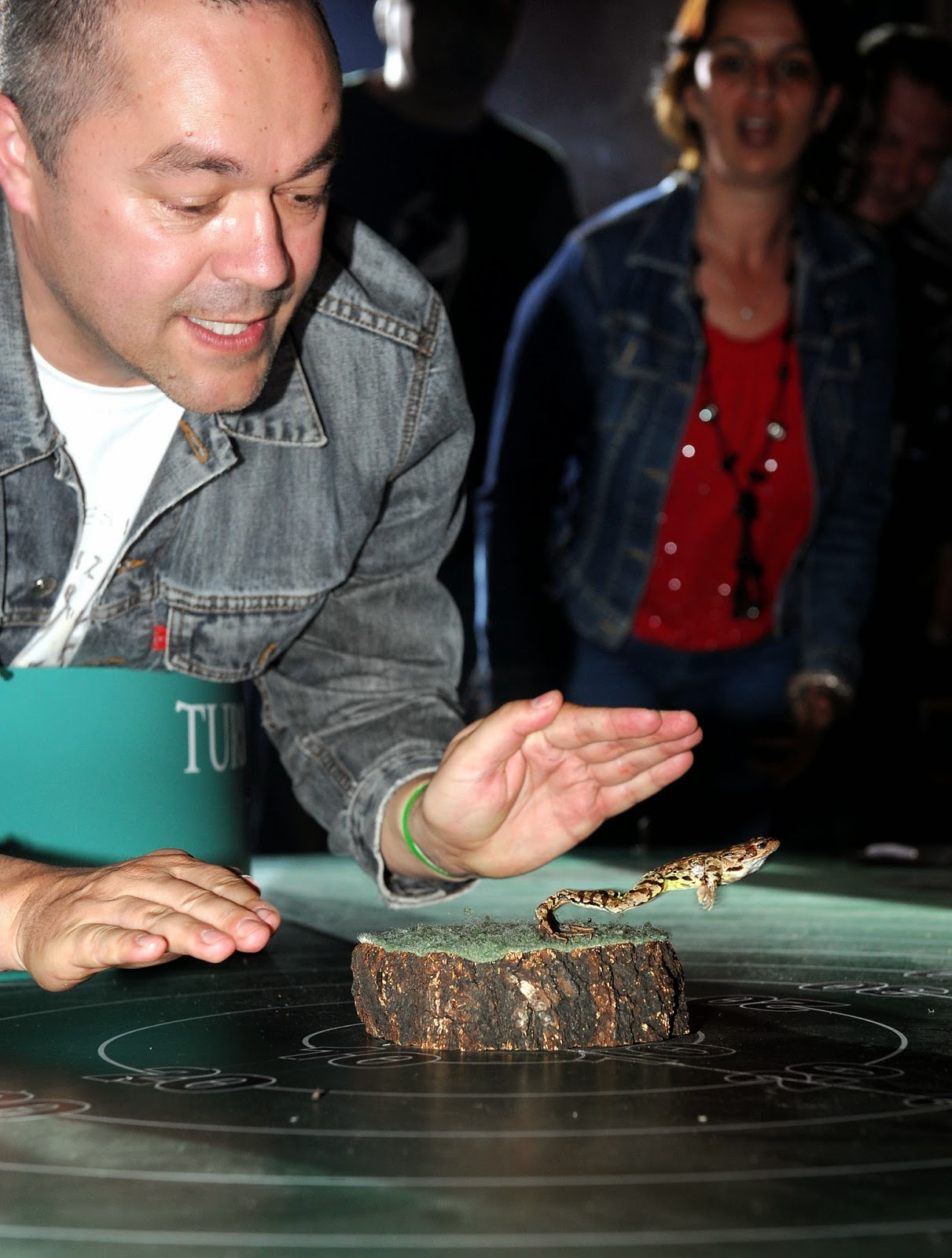 Animals, Croatian, Frog, Frog Competition, Frog Jumping Competition, Frognight, Leo Gregov, Lokve, Offbeat, Zagreb,
