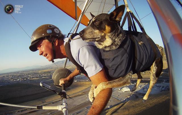 Дэн МакМанус и его собака по кличке Шэдоу летят на параплане над Солт-Лейк-Сити, штат Юта. (Jim Urquhart/REUTERS)