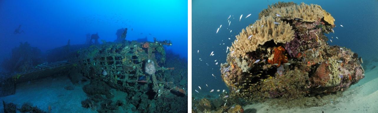 Wisata di Indonesia: Diving - Wisata Pulau Morotai