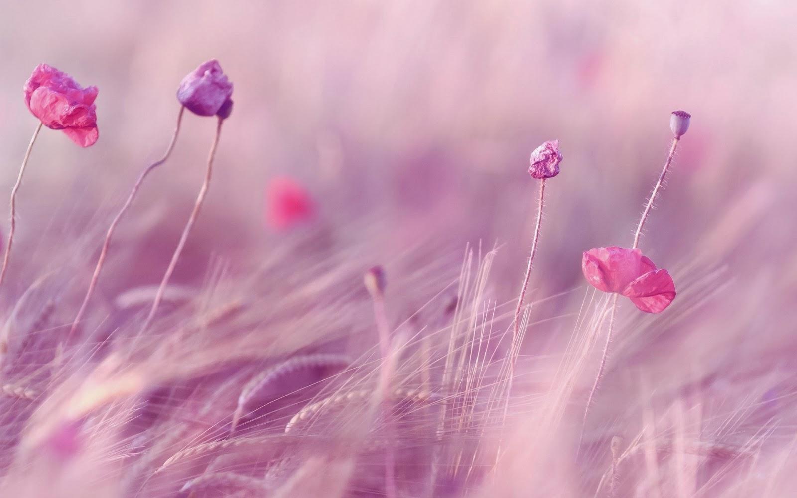 Pink flower background 1377212 - Ngedit Foto Background Cantik Ini