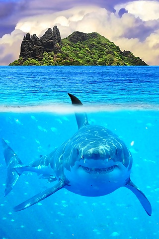 iPhoneZone: Shark Fish iPhone Wallpapers Shark In The Water Wallpaper