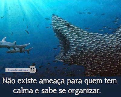 Calma, Organização e Disciplina!